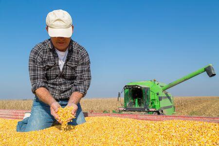 mazorca de maiz: granjero sonriente feliz durante la cosecha de ma�z de ma�z