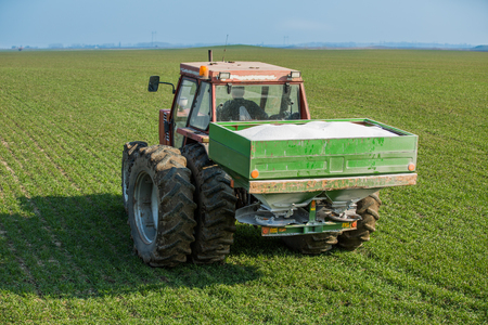 potassium: Farmer fertilizing wheat with nitrogen, phosphorus, potassium fertilizer Stock Photo