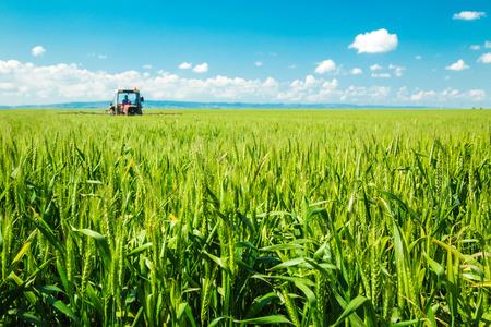 cosecha de trigo: campo de pulverización cultivos de trigo