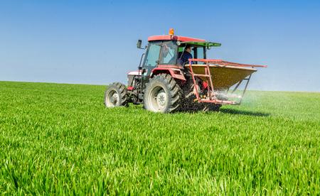fertilizing: Farmer in tractor fertilizing wheat field at spring with npk