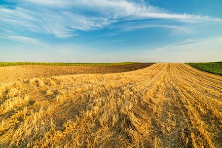 stubble field: Wheat stubble field rural landscape