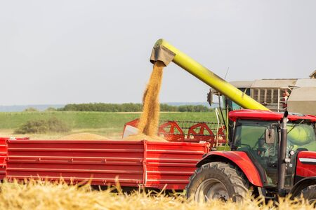 tractor trailer: Combine harvester unloading wheat grains into tractor trailer