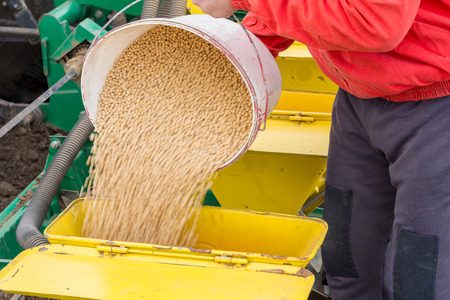 seeding: Soybean seeds in buckets befor seeding at field Stock Photo