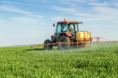 Farmer spraying green wheat field
