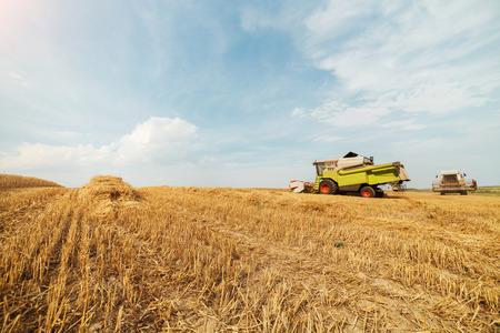 cosechadora: Máquina segadora en acción en el campo de trigo