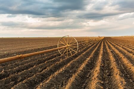 the arable land: Potato field with irrigation system, right after seeding