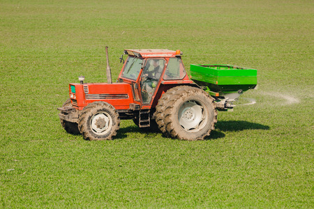 nitrogen: Farmer in tractor fertilizing wheat field at spring with npk