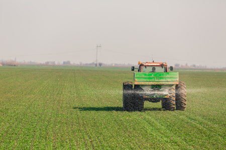 Farmer in tractor fertilizing wheat field at spring with npk