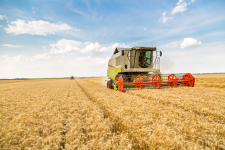 Combine harvester in action on wheat field
