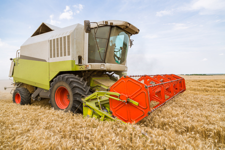 Combine harvester in action on wheat field. Harvesting is the process of gathering a ripe crop from the fields. Фото со стока