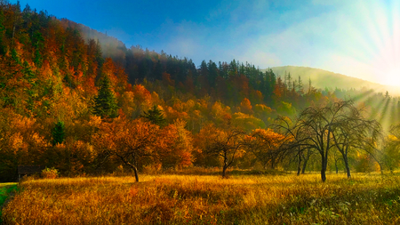 Colorful mountains and forest. Autumn sunrise in the mountains of the Carpathians. Green, yellow, orange colors of autumn.