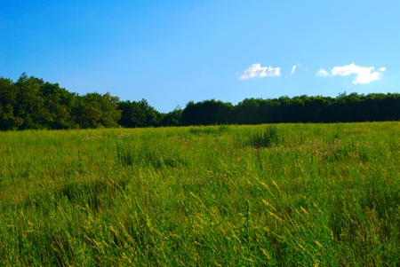 Clear skies and green grass. Large trees in a row Stock Photo - 8689111