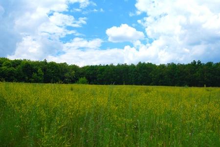 明確な空と緑の芝生。行の大きな木
