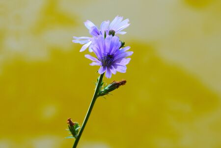 Beautiful purple flowers on the background of the river photo
