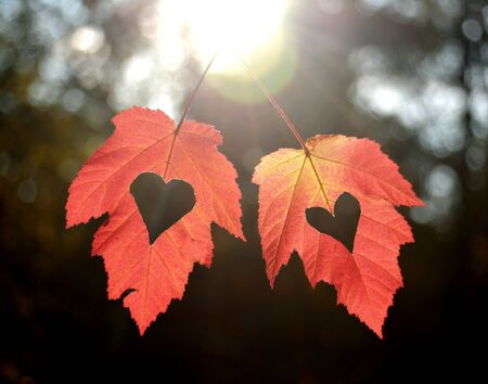 Two autumn leaves with heart