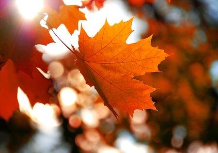 노란 단풍 잎 스톡 콘텐츠