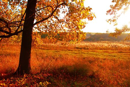 autumn landscape: Autumn landscape Stock Photo