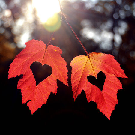 2 november: Two autumn leaves with heart