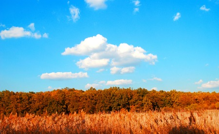 Autumn landscape with trees, reeds and the sky photo