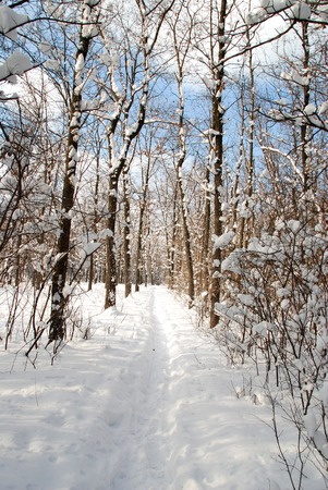 wintery day: Winter landscape of frosty trees, white snow and blue sky
