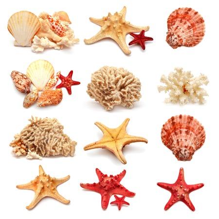 海の星、シェル、サンゴの白い背景で隔離のコレクション