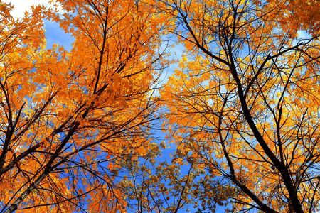 Autumn landscape 版權商用圖片