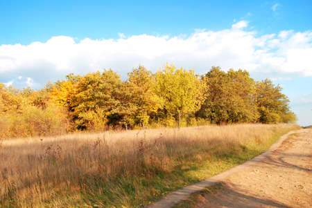 yellow trees: The path and yellow trees Stock Photo