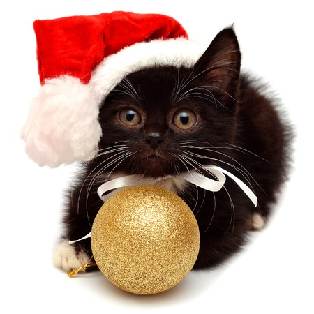 white  hat: Little kitten with Santa Claus hat isolated on white background Stock Photo