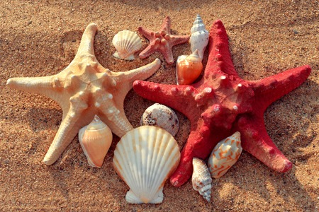 Starfish and shells on the sand photo