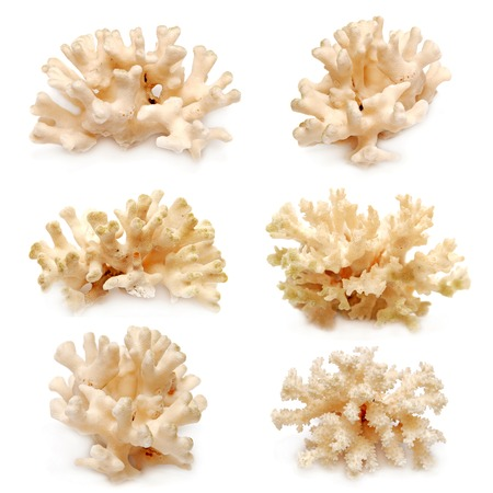 hard coral: Collection of coral isolated on white background