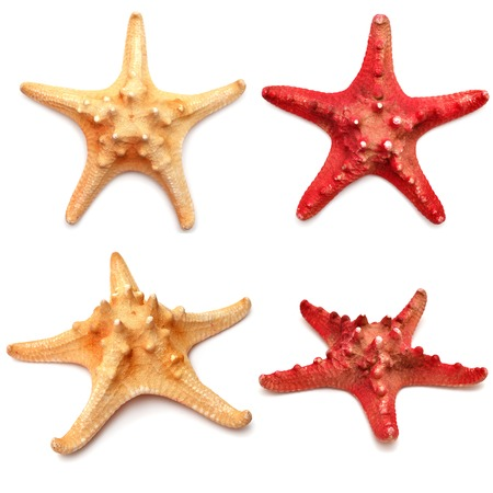 Sea stars collection isolated on white background Zdjęcie Seryjne - 37193481