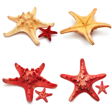 Sea stars collection isolated on white background photo