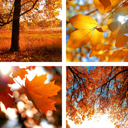 Collage of photos of autumn with autumn leaves and landscapes photo