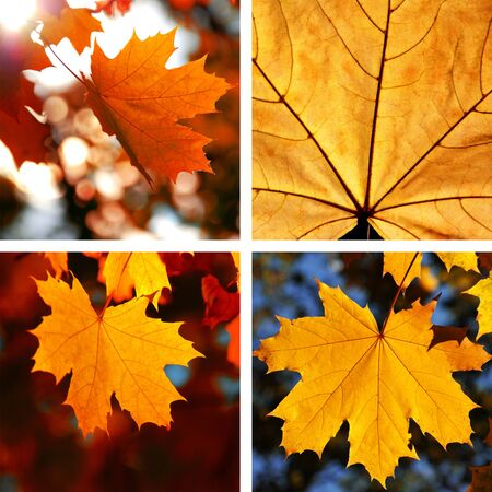 Beautiful collage of autumn leaves photo