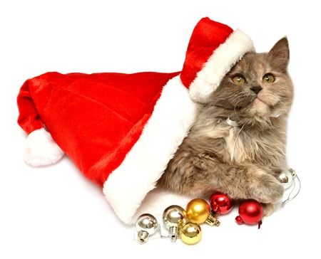Little kitten with Santa Claus hat isolated on white background photo