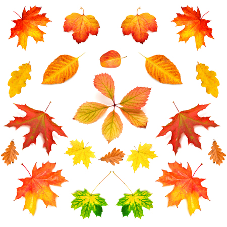 Collection of autumn leaf isolated on white background photo
