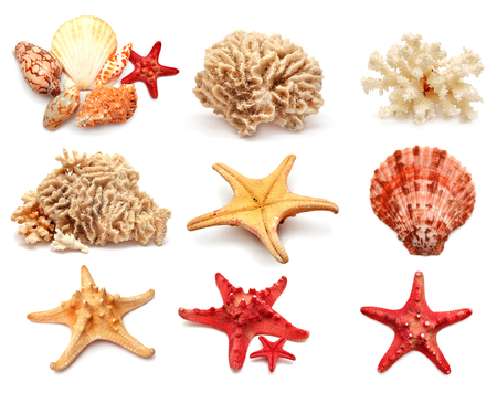 Collection of sea stars, shells and coral isolated on white background photo