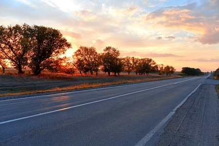 Sunset and road with trees photo