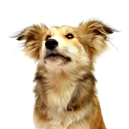 Beautiful puppy isolated on white background Stock Photo