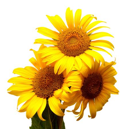 Bouquet of sunflowers isolated on white background Zdjęcie Seryjne