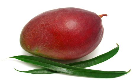 Mango with leaf isolated on white background