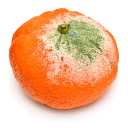 mustiness: Moldy mandarin isolated on white background