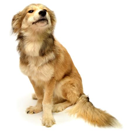 Beautiful puppy isolated on white background Zdjęcie Seryjne