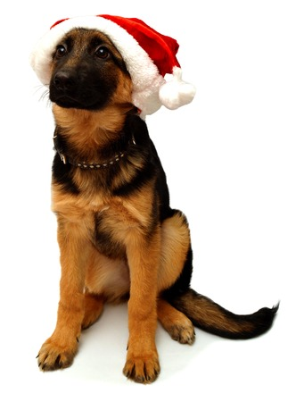 German Shepherd dog with a cap of Santa Claus isolated on white background Zdjęcie Seryjne