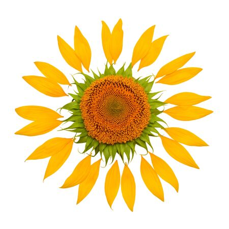 Creative idea of the sun from a sunflower and petals. Yellow flower and core. Flat lay, top view Foto de archivo