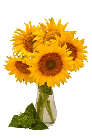 Creative still life idea flowers of sunflower bouquet and closed young sunflower in a glass vase. Isolated on white background. Floral arrangement. Picturesque and conceptual scene. Flat lay, top view Stock Photo