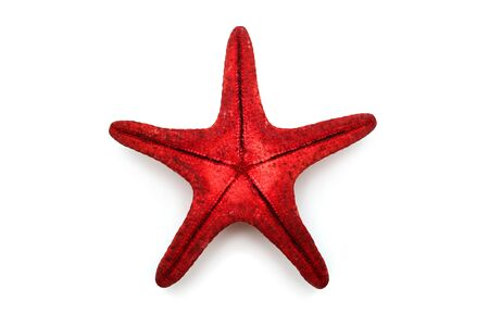 Red sea star isolated on white background. Creative concept, marine life