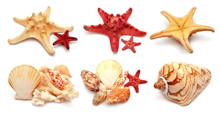 Collection of sea stars, shells and coral isolated on white background. Flat lay, top view. Creative concept, marine life