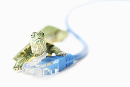 Turtle on LAN cable for slow internet connection, with lot of copy space Stock Photo - 5557612