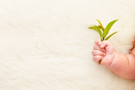 Babys hand holding young greenplant, for a concept of growth itself. ***This photo has been stitched*** Stock Photo